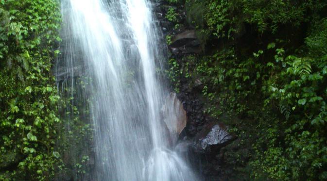 Di air terjun Cisurian, hiduplah satwa endemik asli Jawa, katak merah. Mereka menempel di bebatuan sekitar air terjun. (Panji Prayitno/Liputan6.com)