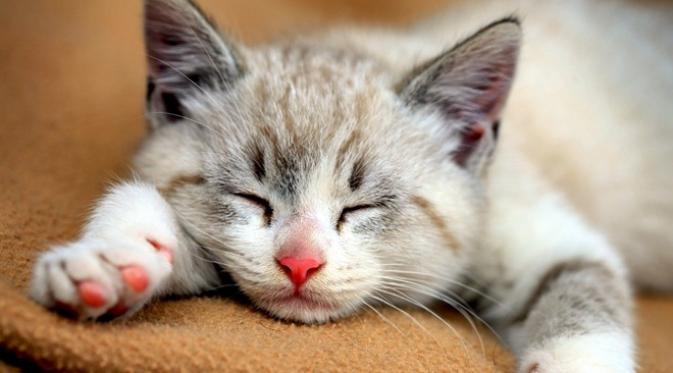 Kucing  | Foto : istimewa