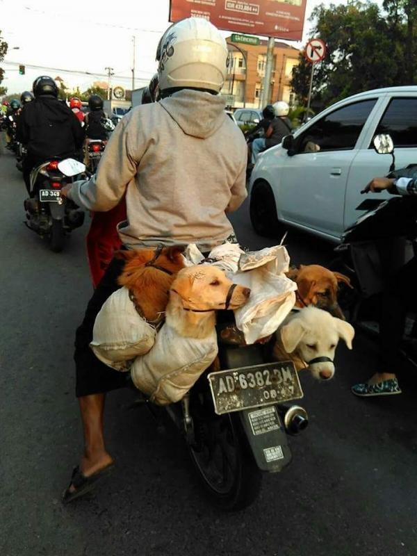 Pecinta Satwa Geram, Anjing Dilipat dalam Karung untuk Dibantai   foto : facebook