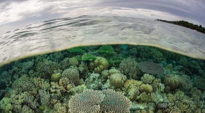 Taman Laut Wakatobi
