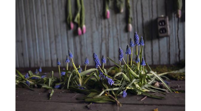 Coba berikan kesempatan penjual bunga untuk menyulap rumah Anda menjadi seperti rumah terbengkalai satu ini.